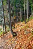 Footpath through autumn forest in late autumn. Wooden fence along the edge. beautiful nature background of october stock image