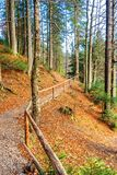 Footpath through autumn forest in late autumn. Wooden fence along the edge. beautiful nature background of october stock images