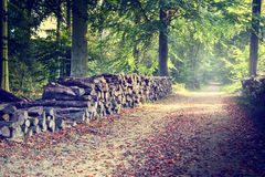 Footpath in autumn forest Royalty Free Stock Photography