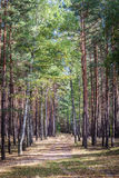 Footpath in the autumn forest in sunny day Royalty Free Stock Photography