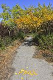 Footpath in autumn park with fall inscription Royalty Free Stock Images