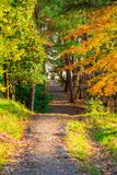 Footpath in autumn park. The footpath between trees in Arboretum in sunny autumn day, Sochi, Russia Stock Photo