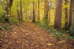 Footpath through autumn wood Royalty Free Stock Photos