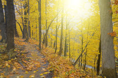 Footpath through beautiful. Autumnal forest Royalty Free Stock Photo