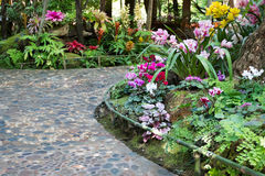 Footpath with beautiful flowers in the beautiful garden Royalty Free Stock Photo