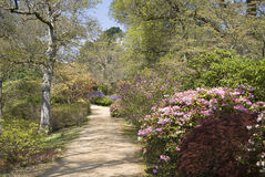 Footpath through beautiful trees and shrubs in Spr Stock Photo