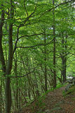 Footpath in beech forest Stock Photos