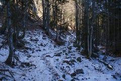 Footpath at Black lake. Julian Alps Royalty Free Stock Image