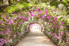 Footpath in a botanical garden with orchids lining the path Stock Photography