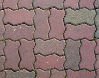 Footpath brick texture Stock Images