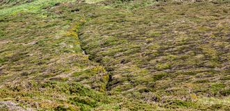 Footpath in Brittany Royalty Free Stock Photography