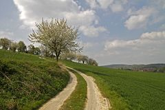Footpath with cherry trees in Germany Stock Photo