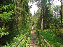 A footpath combined with ferns and trees in a forrest in the surrounding of Wildberg in Germany. Stock Images