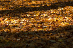 Footpath covered with colorful autumn leaves Royalty Free Stock Photography