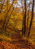 Footpath covered with leaves Royalty Free Stock Image