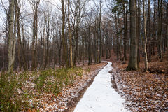 Footpath in deciduous winter wood Royalty Free Stock Photo