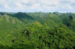 Jungle on an island Cat Ba in Vietnam. Footpath in the dense jungle of the Cat Ba island, Halong bay, Vietnam Stock Photography