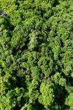 Jungle on an island Cat Ba in Vietnam. Footpath in the dense jungle of the Cat Ba island, Halong bay, Vietnam Stock Photo