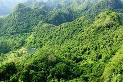 Jungle on an island Cat Ba in Vietnam. Footpath in the dense jungle of the Cat Ba island, Halong bay, Vietnam Royalty Free Stock Photo