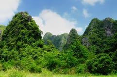 Jungle on an island Cat Ba in Vietnam. Footpath in the dense jungle of the Cat Ba island, Halong bay, Vietnam Stock Image