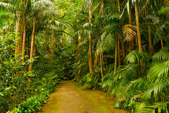 Footpath in a dense rainforest. Stock Photography