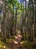 Footpath Through Dense Woods, Dappled Sunlight royalty free stock images
