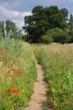Footpath through an English Meadow with poppies Royalty Free Stock Photography