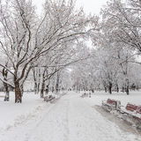 Footpath in a fabulous winter city park Royalty Free Stock Photography