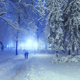 Footpath in a fabulous winter park Stock Photography