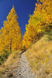 Footpath in the fall Royalty Free Stock Photo