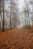 Footpath in fall forest Royalty Free Stock Photography