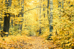 Footpath in fall forest Stock Photo