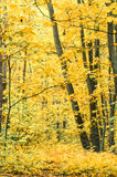 Footpath in fall forest Stock Images