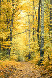 Footpath in fall forest Stock Photography
