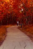 Footpath through Fall Trees. Footpath through red and orange fall colored trees. Two people strolling Royalty Free Stock Image