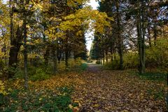 Footpath with fallen leaves through the park in Autumn. October in the Pulkovo park, Saint-Petersburg stock photos