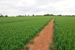 Footpath through Farmland Royalty Free Stock Photography