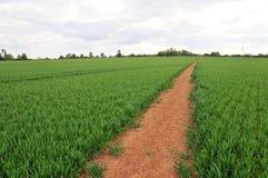 Footpath through Farmland. Landscape View of a Footpath through Farmland Royalty Free Stock Photography