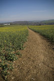 Footpath through field to village. Royalty Free Stock Photo