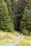 Footpath through fir-trees Royalty Free Stock Photos
