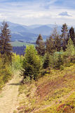 Footpath among fir-trees in the mountains Royalty Free Stock Photography