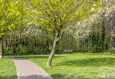 Footpath in a flowered park. Green and flowering trees. Bright lawn.  stock photos