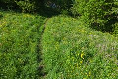 Footpath through the flowering meadow Royalty Free Stock Photos