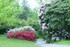 Footpath between flowering shrubs in spring garden royalty free stock image