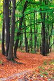 Footpath in forest Royalty Free Stock Image