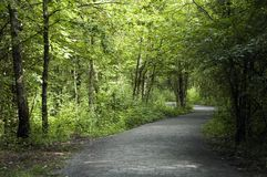 Footpath in forest. Grey footpath in green woods in nature reserve of Doussard, Annecy, France Stock Images