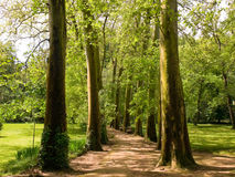 Footpath in the forest. Peaceful footpath between big tress and meadows Stock Image