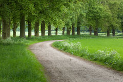 Footpath in Forest Stock Images