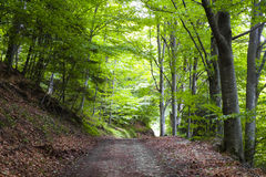 Footpath in the forest Royalty Free Stock Photography