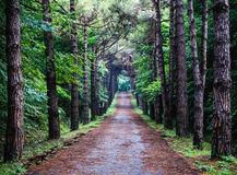 Footpath in forest. This footpath in Ataturk Arboretum from Istanbul Stock Image